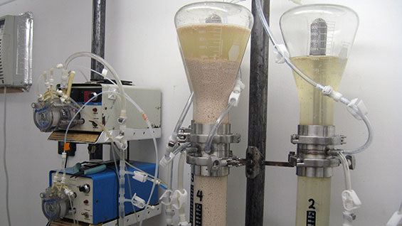 Yeast beads fermenting beet sugar in ICD's fermentation system
