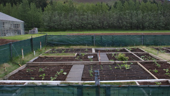 Agricultural University of Iceland, heated garden prepared and planted by students